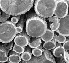 wood_bw