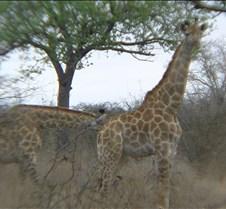 Ivory Lodge & Safari Pictures0082