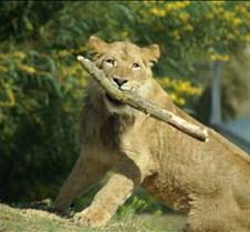 Wild Animal Park 03-09 200