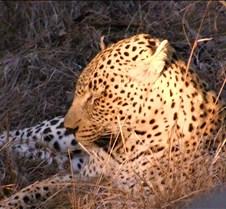 Ivory Lodge Safari Mupulanga0026