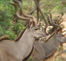 Ivory Lodge & Safari Pictures0152