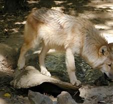 091903 Wolf Spirit 257