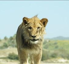 Wild Animal Park 03-09 206
