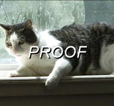 072214_PetOfWeek_Cat