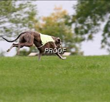 Run2_Course2_IMG_6381 copy