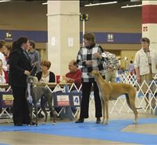 Winners_9-12_Puppy_Dog_8503CC