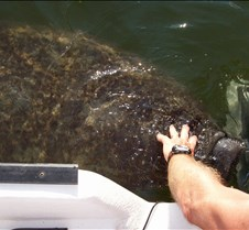 Terry pets the Manatee!