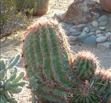 Tucson Sunlit cactus 2