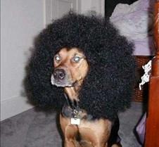 HairDog