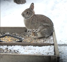 Rabbit deck dining on tray feeder for th