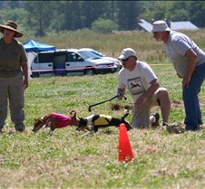 Basenjis_8Jul_Run1_Course2_0399CR2