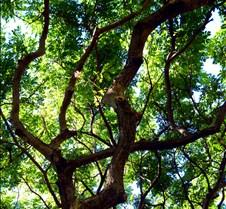 KP tree 071810