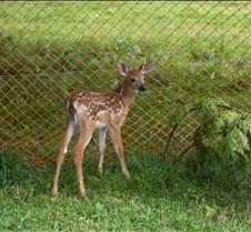 Lil' Bambi (.//k)