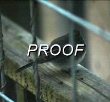 01/14/2009 bird