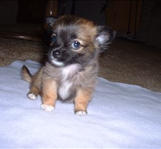 Puppy Picts 062