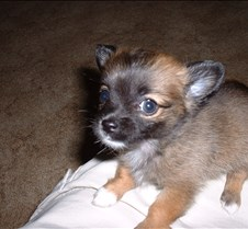 Puppy Picts 010