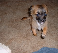 puppy picts 9-21-03 002