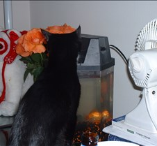 Kitty Picts - December 2003