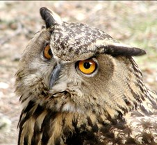 062802 OWL 41