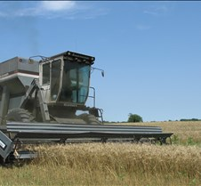 06152005CuttingWheat2