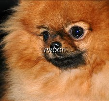 dogshow11