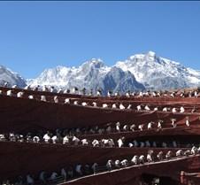 2008 Nov Lijiang 082