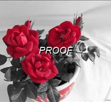 Mini Roses