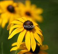 drooping flowers