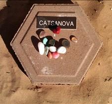 BF735 AO Catsanova