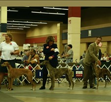 Winners_Bred_By_Exhibitor_Bitch_3205CCr