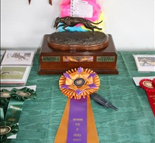 Lure_Coursing_BOB_Trophy_0593