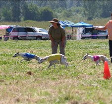 Whippets_8July_Run1_Course4_0196