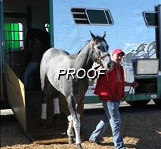 FIRSTHORSE