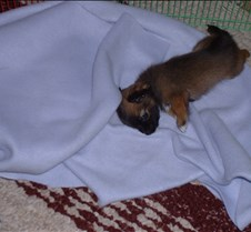 Puppy Picts 025