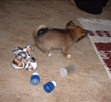 Puppy Picts 012