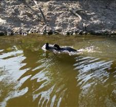 Wild Animal Park 03-09 270