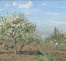 278Orchard in Bloom-Camille Pissarro-187