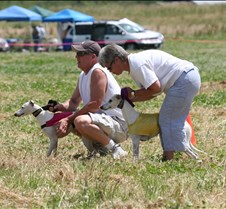 Whippets_8July_Run2_Course4_4993