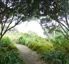 Walking Path NZ