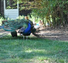 Christmas 2011 Gympie Bird Farm   (2)