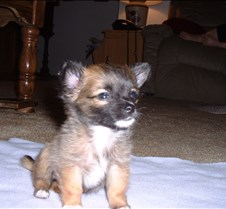 Puppy Picts 064