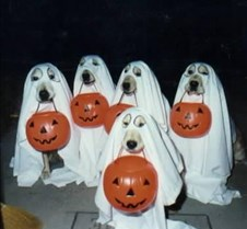 GhostDogs