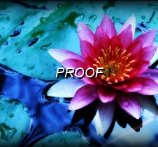002 _ Water Lily