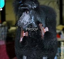 Poodle Parlour