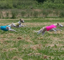 Whippets_8July_Run2_Course1_4935CR