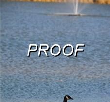03-05-13_Ducks01