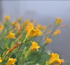 Flowers in the fog