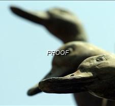 duck4best