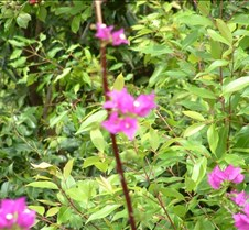 Flowers near Wailua River