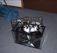 kitty picts dec 03 008